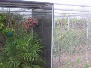 Shadecloth covered area for ferns